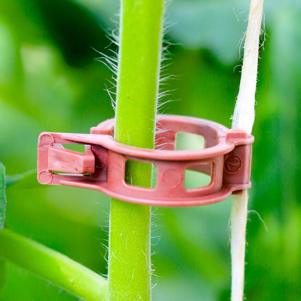 BIO-Tomatenclip hält den Pflanzenstängel ohne ihn zu quetschen.